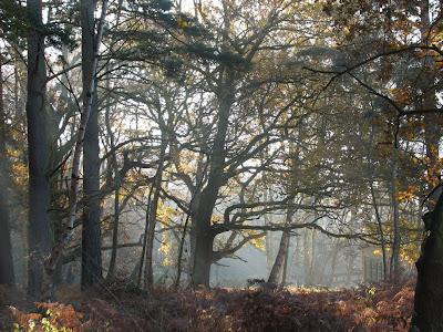 Woodland, Sandy, Beds