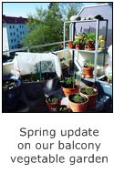 spring update on our balcony vegetable garden