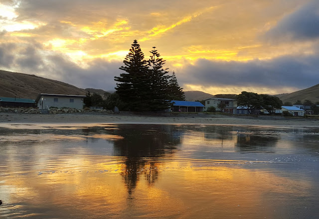 Photo of reflected tree and hills at sunset on Castlepoint beach