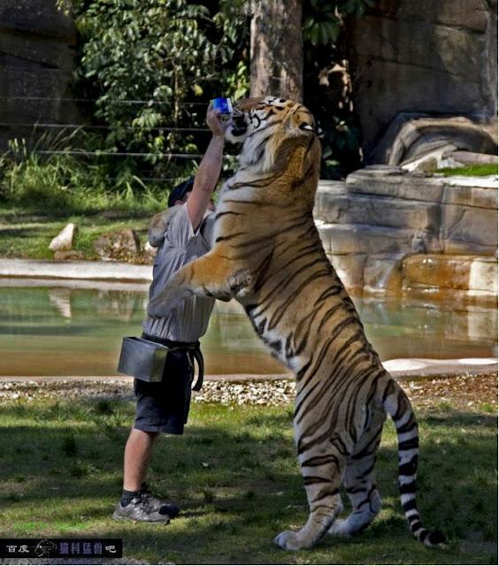 Comparação de  tamanho entre  animais  e   Seres humanos - Página 2 73578d25cce2d17835a80ff1