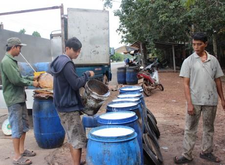 CTCS Dầu Tiếng đảm bảo thu mua mủ tiểu điền cao hơn giá thị trường. Trong ảnh: Một điểm thu mua cao su tiểu điền tại xã Thanh An, huyện Dầu Tiếng