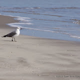 02-07-15 Corpus Christi & South Padre Island - _IMG0433.JPG