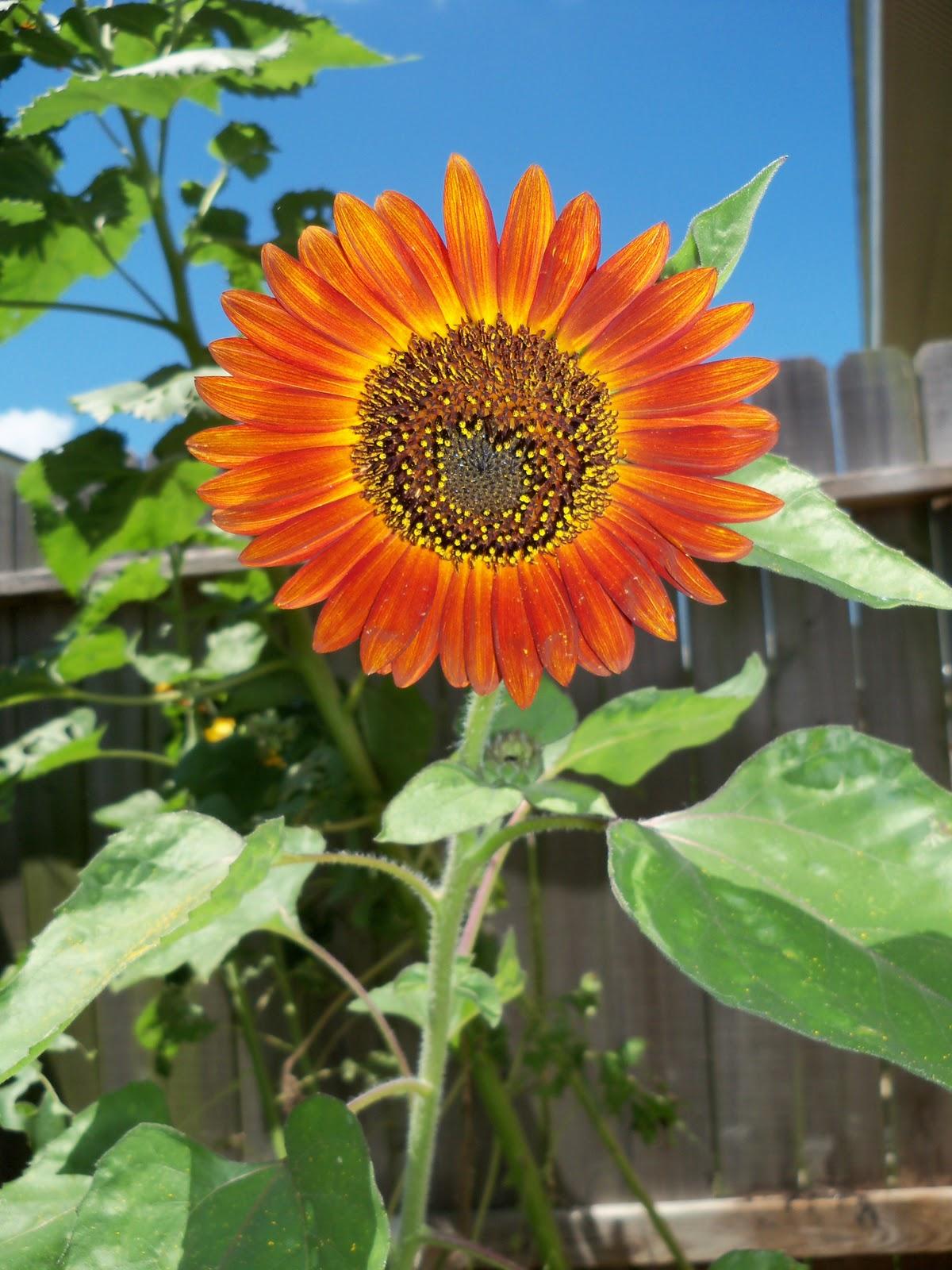 Gardening 2010, Part Three - 101_4505.JPG