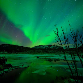 Aurora and bushes by Benny Høynes - Landscapes Starscapes ( canon, bennyhøynes, northernlights, mk2, aurora, boreoalis, norway )