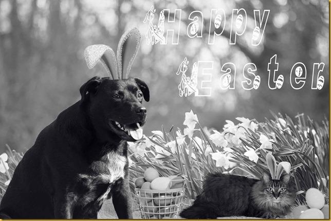 Black & White Easter