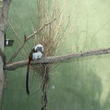 Zoo Snooze 2015 - IMG_7299.JPG
