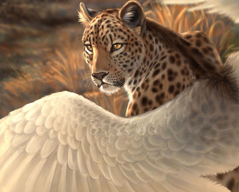 Flying Jaguar, Mystery