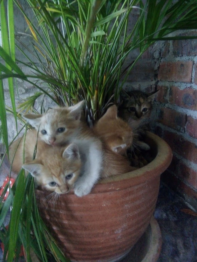 Empat Ekor Anak Kucing Dan Ibunya...
