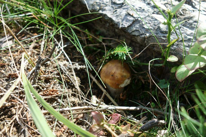 О жизни: Поход за грибами