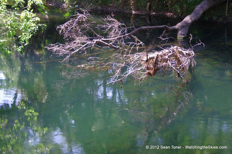 04-04-12 Hillsborough River State Park - IMGP9681.JPG