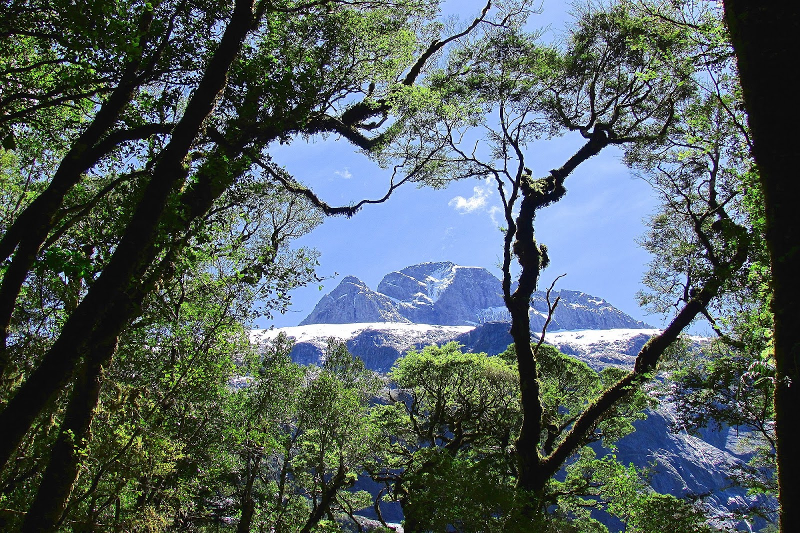 Milford Sound Trees and Mountains.jpg