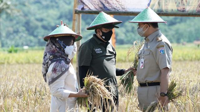 Anies Duluan Panen Padi BUMD DKI di Cilacap, Apa Kabar Lumbung Pangan Pemerintah?