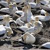 027-bird-island-1.jpg