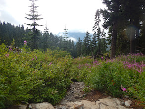 Photo: Fireweed fills a lovely meadow