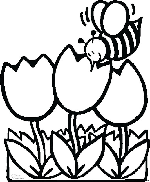 Tulip Coloring Pages For Kids With Pages Bee Tulips