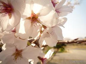 アップの一枚。当日は暖かく絶好の花見日よりでした。
