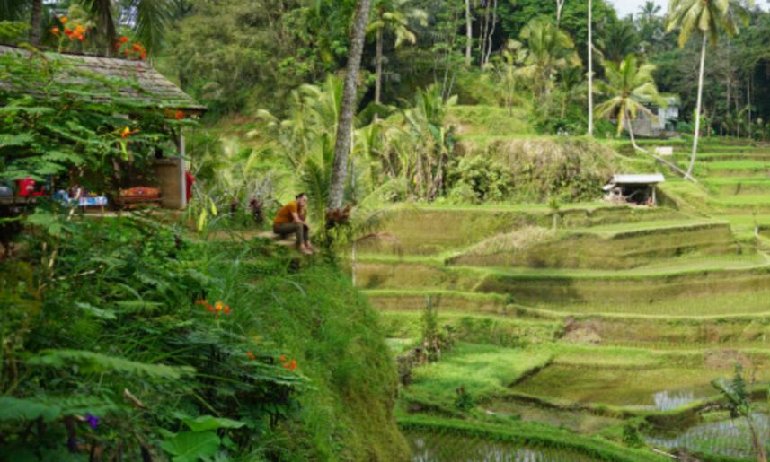 Liburan Romantis Memandang Sawah di Ubud Bali