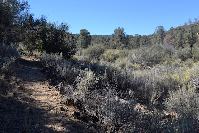trail through sage brush