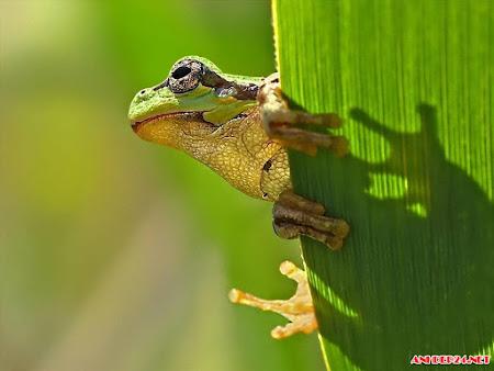 Ngắm nhìn hình ảnh những chú ếch xanh đẹp lạ ngộ nghĩnh cực kì đáng yêu