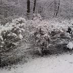 Зимняя уборка в Дендрарии 086.jpg