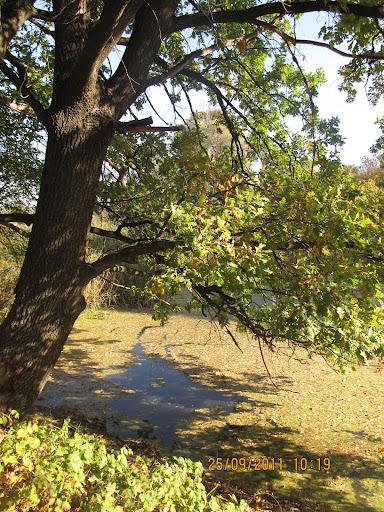 Той, хто хоч раз побував у Гомольшанських лісах, пам'ятає цю красу завжди!