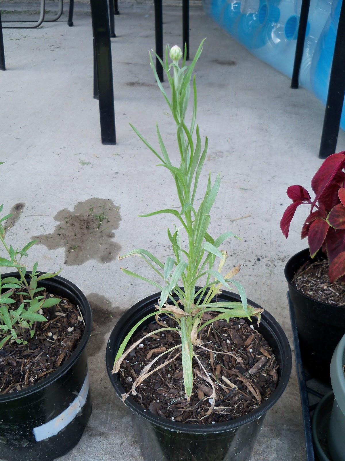 Gardening 2010, Part Three - 101_4917.JPG