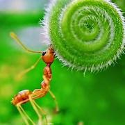 к чему снится муравей?