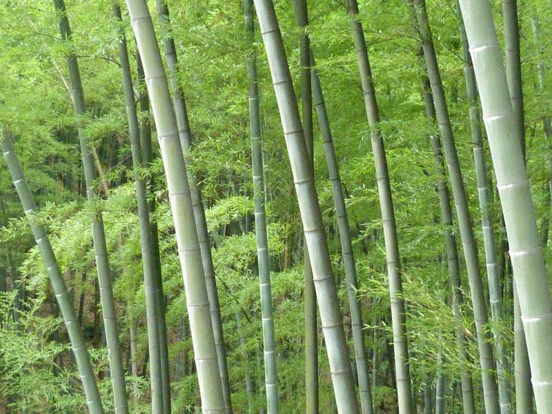 CHINE.SICHUAN.YIBIN, et la mer de Bambous - 1sichuan%2B543.JPG