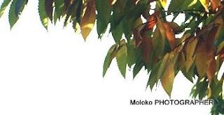 Цэцэрлэгээр зугаалах зуур set2 /Photography by Moloko/