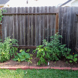 Gardening 2011 - 100_8492.JPG