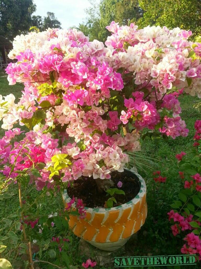Bunga kertas cantuman pelbagai warna ams com
