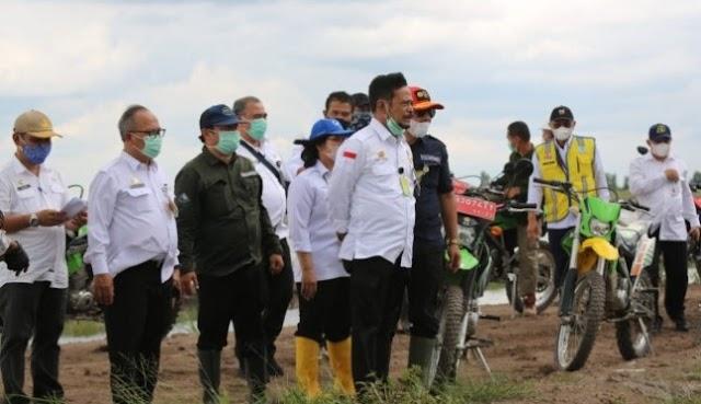 Pengembangan Food Estate Kalteng Berbasis Korporasi Petani