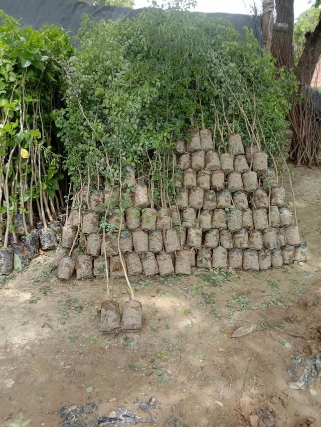 माईंस और क्रेशर वेलफेयर सेवा समिति द्वारा गणेश्वर साईट पर तीन हजार पेड़ लगायेगें