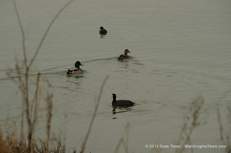 01-26-13 White Rock Lake - IMGP4311.JPG