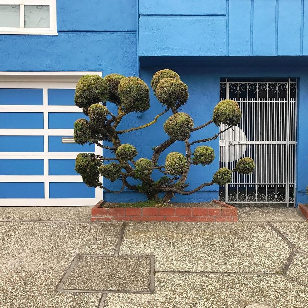 kelsey-mcclellan-topiary-5