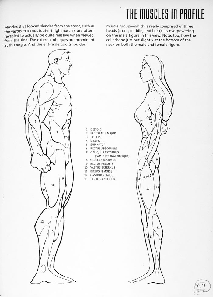 These pages are basic anatomical references for young artists from ...