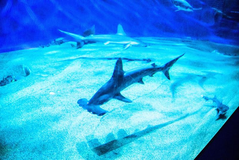 アクアワールド大洗水族館 写真11