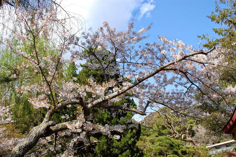 2014 Japan - Dag 7 - jordi-DSC_0264.JPG