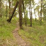 Track on Mt Sugarloaf near Newcastle (324692)