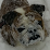 Eddie Thibault's profile photo