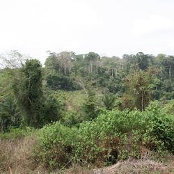 Ghana: Kakum National Park
