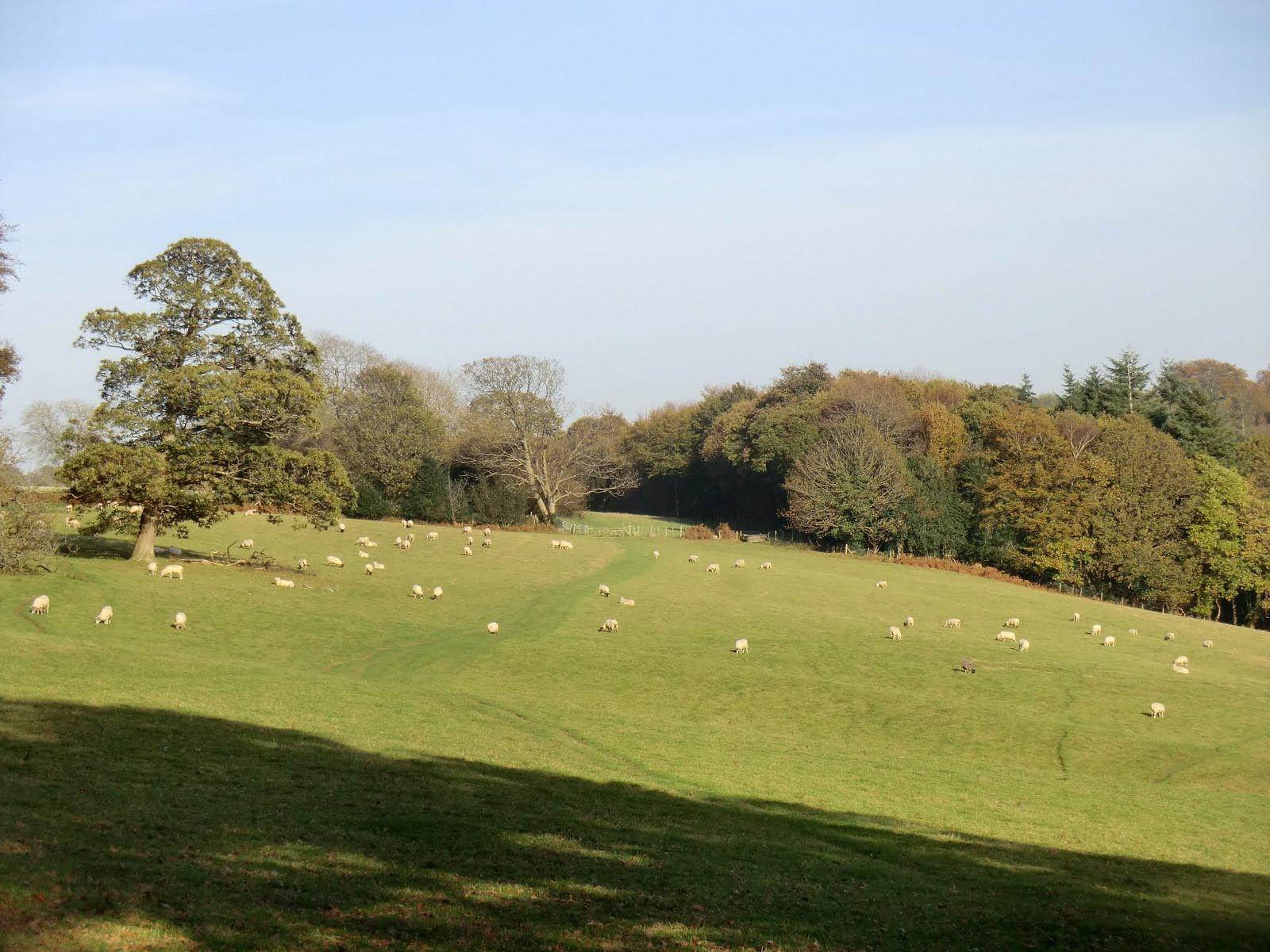 CIMG5632 Hillside path near Burrs Wood