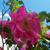 Gardening 2013 - 115_5698.JPG