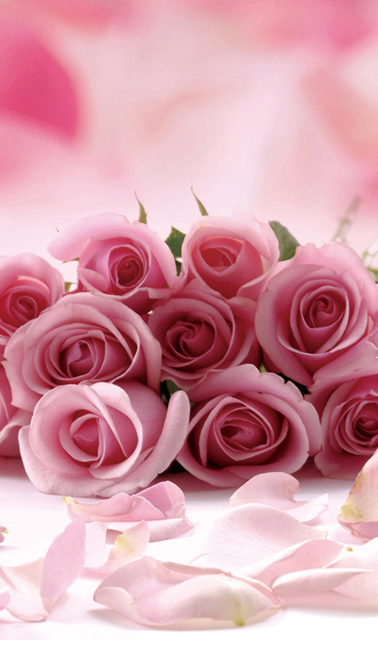 Pink rose flower iphone 6 plus hd wallpaper iphone - Pink rose wallpaper iphone ...
