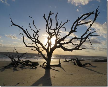 me_ga_jekyll_driftwood_beach