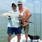 Blacktip shark with Jim (2).jpg