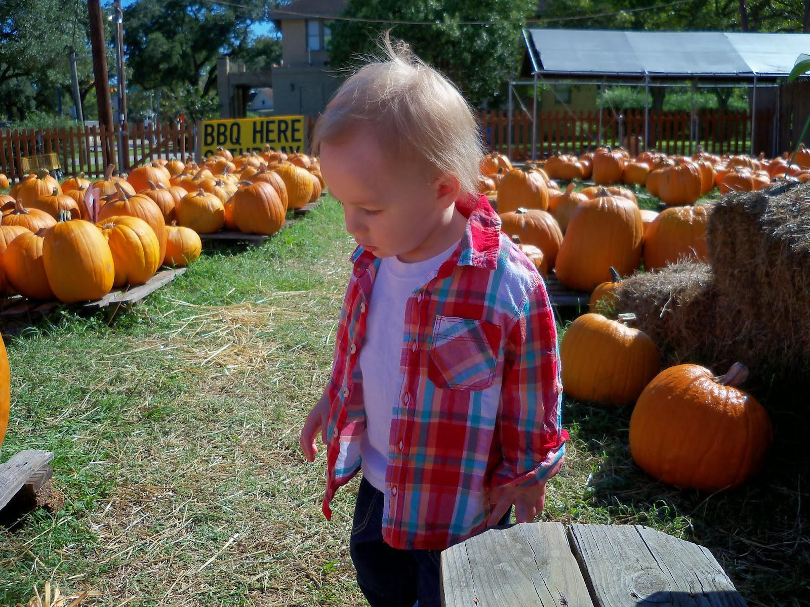 Pumpkin Patch - 115_8224.JPG
