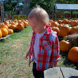 Pumpkin Patch - 115_8224.JPG