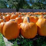 Pumpkin Patch - 115_8277.JPG