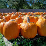 Pumpkin Patch - 115_8277.JPG